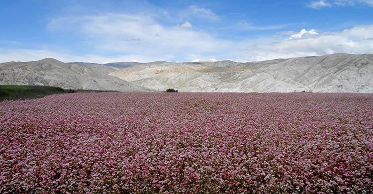 Upper Mustang-Lo- Manthang trek