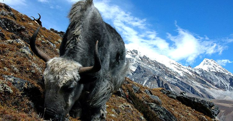 everest-panorama-trek-nepal-destination-anagement-inc-dmi-nepal-majestic-everest-best-holidays-places-pictures-lodges-snowfal-yaksjpg