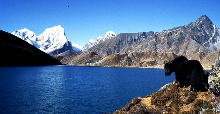 everest-panorama-trek-nepal-destination-anagement-inc-dmi-nepal-majestic-everest-best-holidays-places-pictures-lodges-snowfall-yaks-lakes